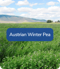 FoodPlotMix-AustrianWinterPea