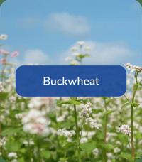 FoodPlotMix-BuckWheat