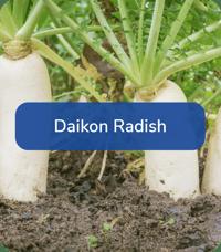 FoodPlotMix-DaikonRadish
