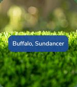 Buffalo, Sundancer