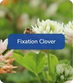 FixationClover