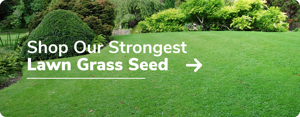 Shop Our Strongest Lawn Grass Seed