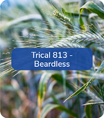 Trical813